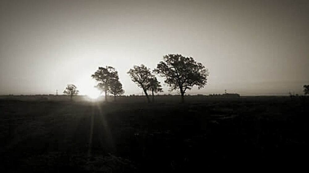 Nature On Your Doorstep the end of the day, and the sun falls into the only trees in the pasture. Sunset Black And White Prarie Lone Tree Sun Flare Light And Shadow Chiaroscuro Gallery Romantic Poetry