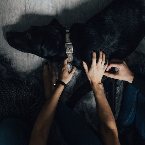 Low Section Of People Petting Dog At Home