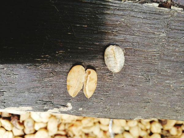 arabica bean Arabicabeans Luwak Coffee Excrete EyeEm Selects