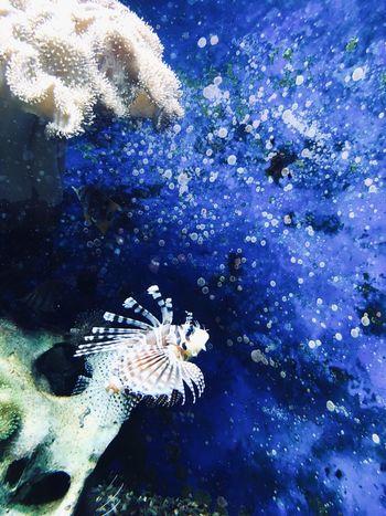 Sea Water Animal Wildlife Animals In The Wild Underwater Animal Themes Animal Marine Sea Life UnderSea Fish