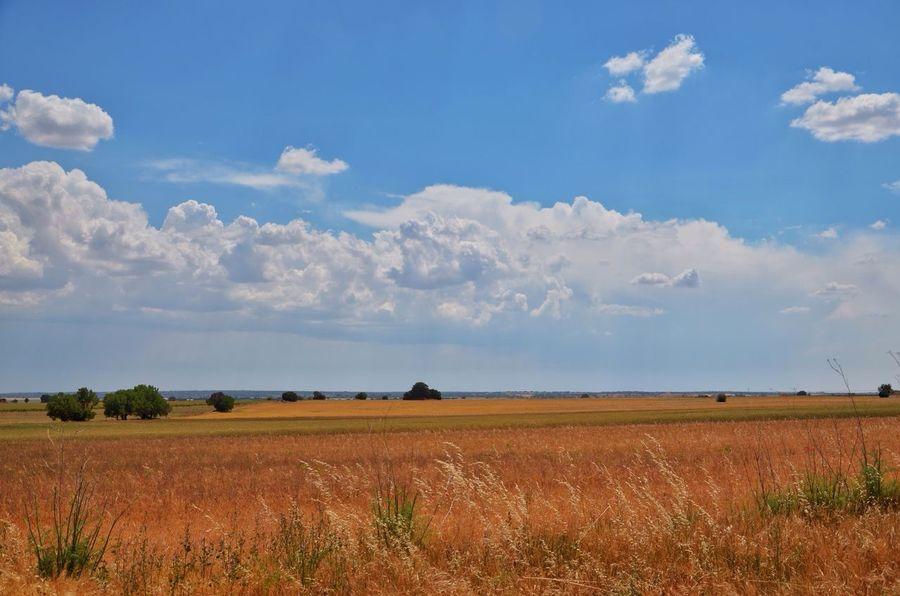 La Mancha en primavera. La belleza de la llanura que nos permite tener una visión más amplia del cielo. LaMancha España Villarrobledo Albacete Campo Primavera Spring Outsider Paisaje Landscape