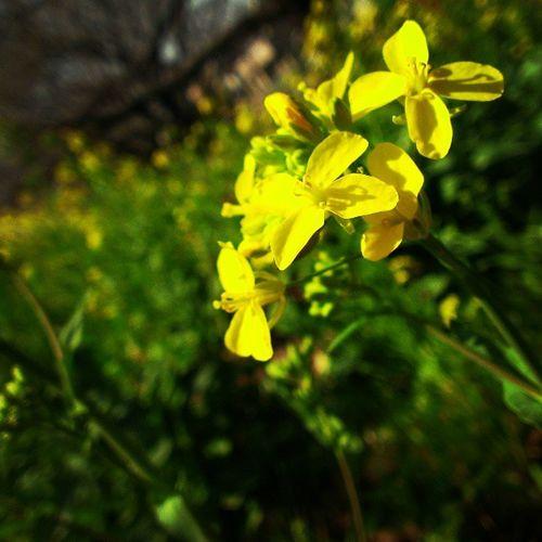 Spring blooms!! 5
