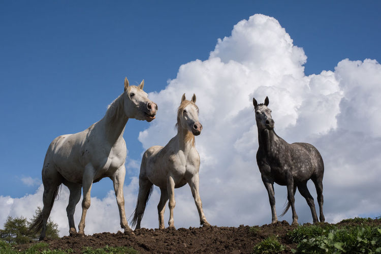 Low angle view of horses standing on field against sky