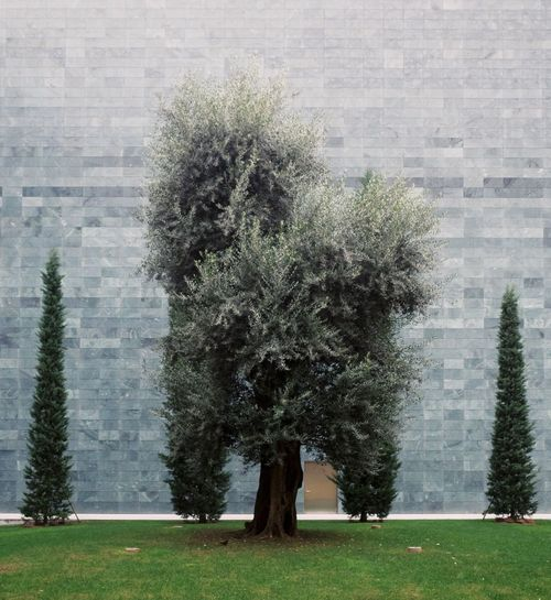 Symetry Plant Tree Growth Nature Grass Day Field Beauty In Nature Green Color Architecture Park Park - Man Made Space Tranquility Tranquil Scene Springtime Decadence