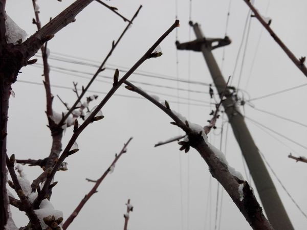 Branches And Snow Electricity Pylon Buds Covered By Snow Ionita Veronica Photography Snow Sky Frozen Cold Temperature Covering Winter Snow Covered Cold Foggy Silhouette