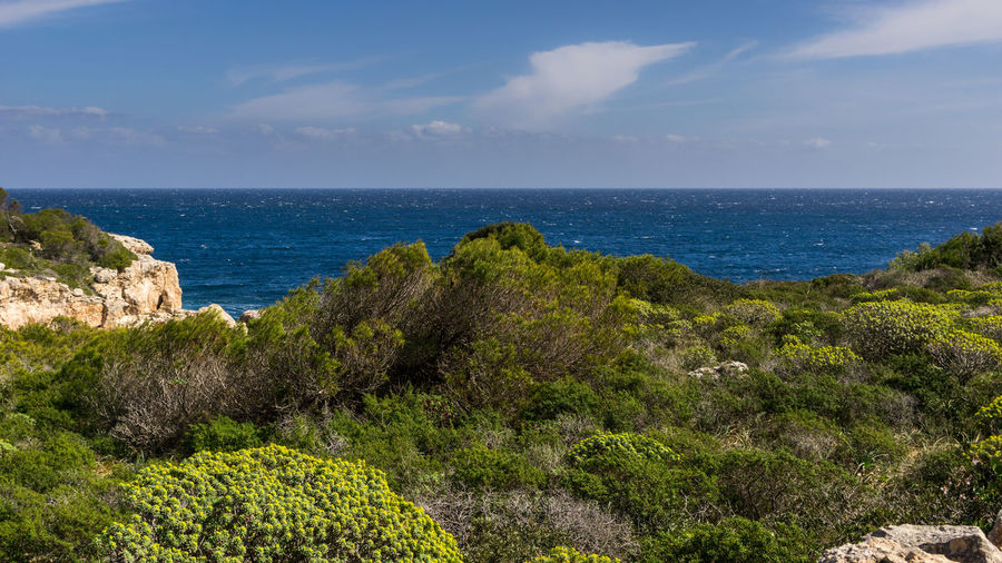 Mallorca Mediterranean Sea Beauty In Nature Cliff Cloud - Sky Day Grass Green Color Growth Horizon Over Water Landscape Nature No People Outdoors Plant Rock - Object Scenics Sea Sky Tranquil Scene Tranquility Tree Water