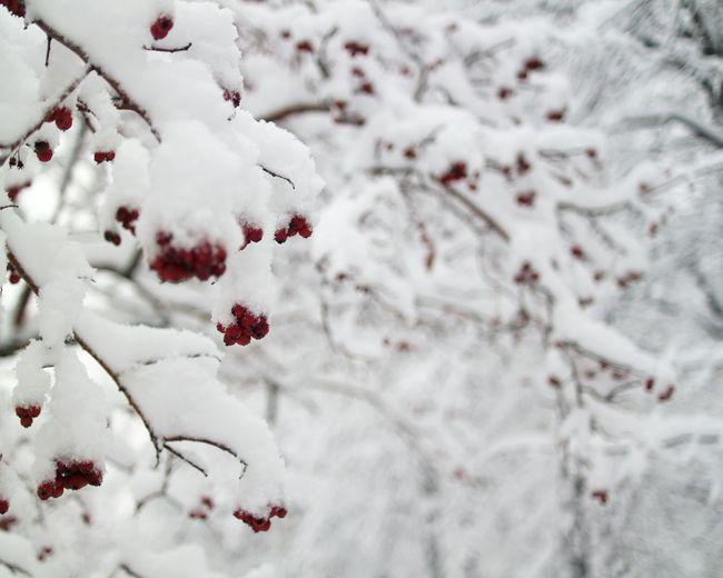 Red&white Snow ❄ Trees Siberia
