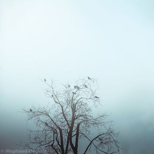 Bare tree against sky during foggy weather