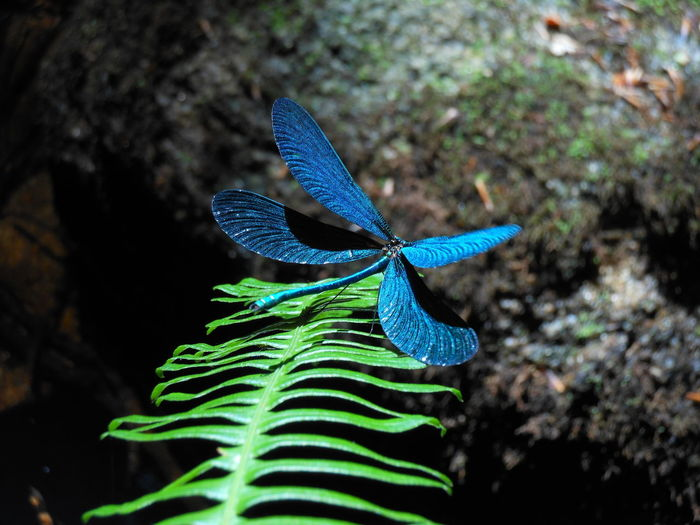 Close-up of blue butterfly on plant