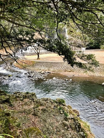 In the summer this creek is full of people Kusu, Japan Cloudy Weather⛅☁ Tree Water Nature Beauty In Nature Tranquility Scenics River Sky Travel Destinations Forest Branch No People Day Landscape Outdoors Tranquil Scene
