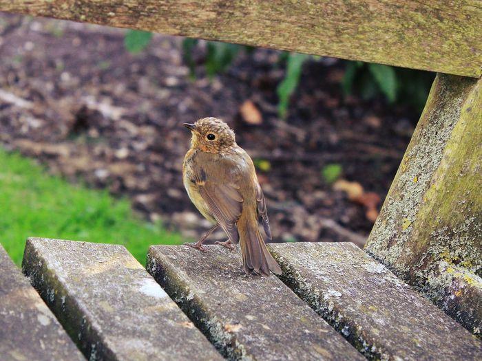 Close Up Kew