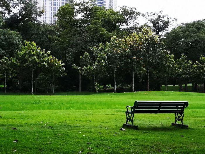 Tree Soccer