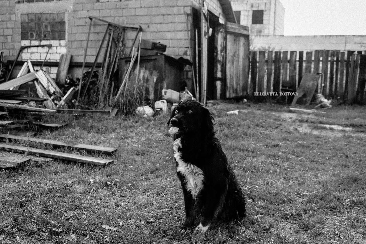domestic animals, animal themes, one animal, built structure, dog, building exterior, architecture, pets, day, no people, outdoors, sitting, mammal, grass