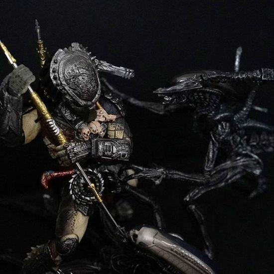 Avp Alienwarrior Alienbigchap Predatorwolf Shmonsterarts BANDAI Figma Xperia_knight