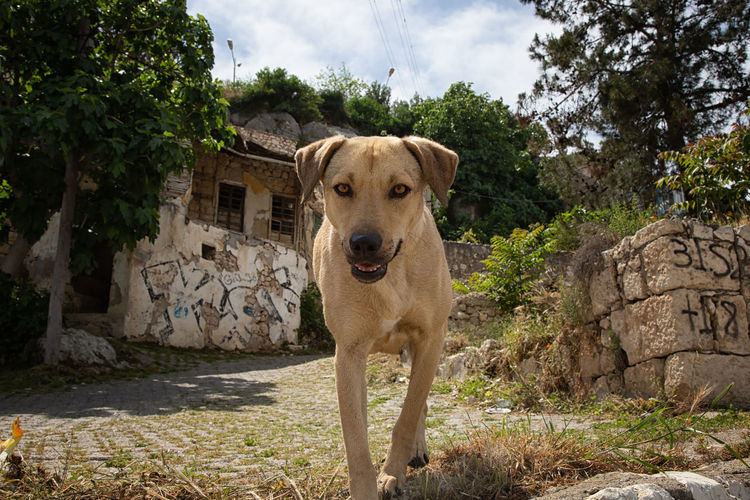 Doggy Love Architecture Floppy Ears Sky And Clouds Turkey Animal Themes Canine Dog Doggy Domestic Animals Hound Mutt Natue New Mother Paws Pet Pouch Pup Silifke Stone Material Stone Wall Structure Trees And Sky