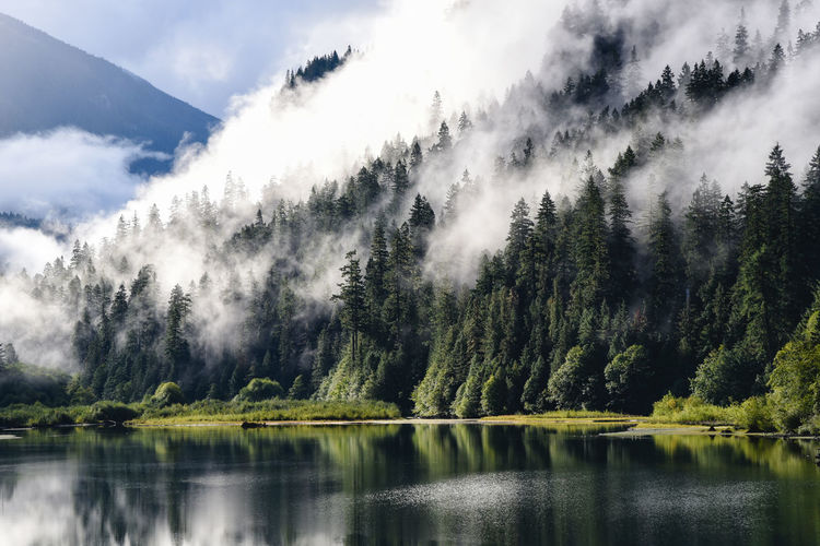 Misty morning lakeside scene Bright Diablo Green North Cascades PNW Pacific Northwest  Reflection Sunlight Tranquility Trees Beauty In Nature Evergreen Forest Fresh Lake Lakeside Mist Misty Morning Mountain Road Trip Scenics - Nature Solitude Tranquil Scene Tranquil Scene Outdoors Wonderland