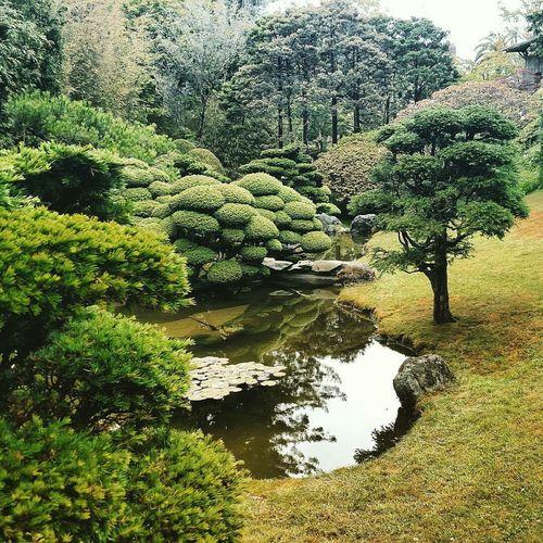 Calm pond against trees in japanese garden