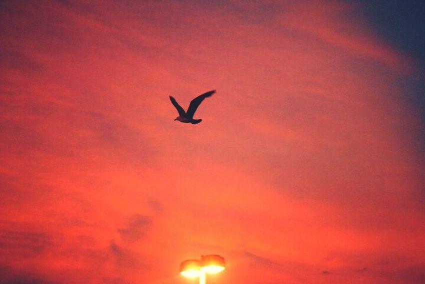 Love #sunset #sun #clouds #skylovers #sky #nature #beautifulinnature #naturalbeauty #photography #landscape