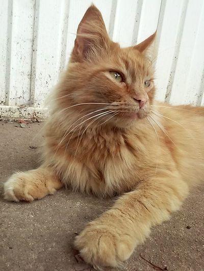 Catsoutside