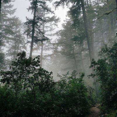 The best way out is always through. Marin Mounttamalpais Mounttam Cataractcreek california hiking fog