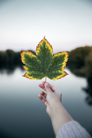 Cropped hand holding leaf against lake