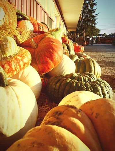 Pumpkin Day Outdoors Food Close-up October Farm Autumn Collection Autumn Pumpkins Freshness TheWeekOnEyeEM Gourds