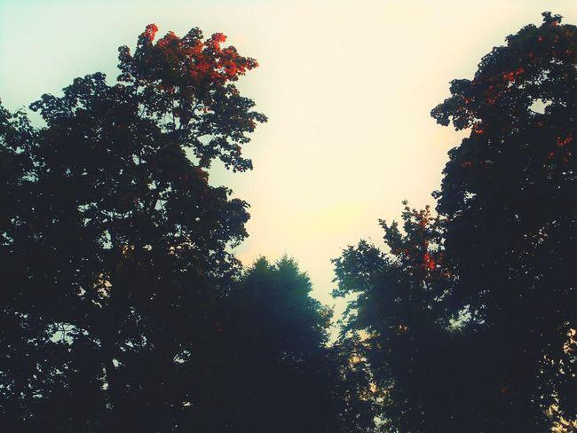 Tree Pixelated Tree Area City Silhouette Defocused Forest Sky Treetop