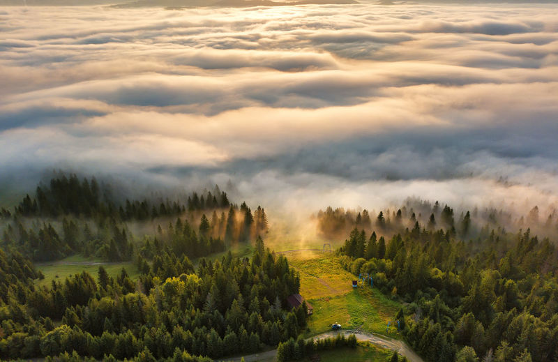 Nature Sunset Land Non-urban Scene Idyllic Fog Environment Growth Landscape Tree Tranquility No People Beauty In Nature Cloud - Sky Tranquil Scene Scenics - Nature Plant Day Outdoors Sunrise Sunlight Sea Woods Carpathian Mountains Dawn