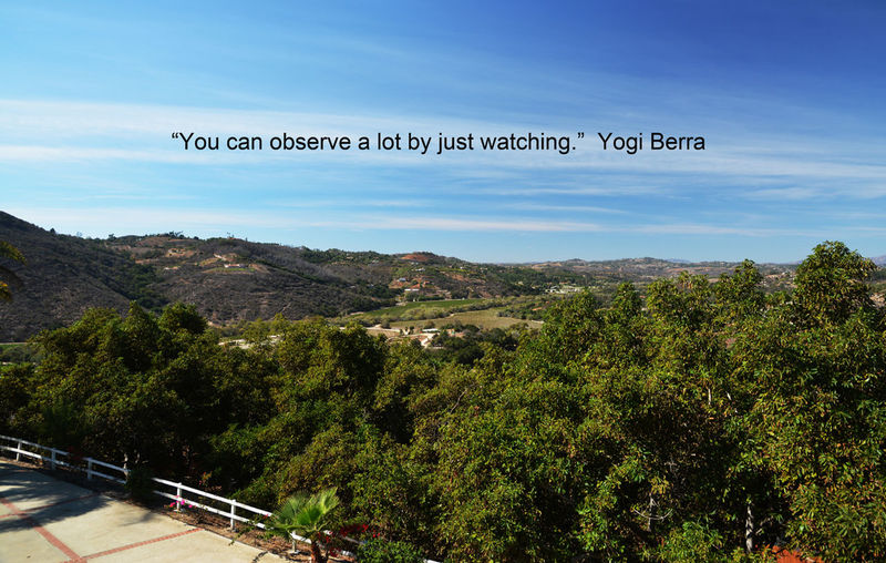 Yogi Berra quote shows the awesome view at 31223 Calle Joya, a #BonsallGem of a property with three rentable units and a productive #avocado grove. This property above the eastern end of Camino del Rey has great views and many other pluses for buyers and/or investors. Call or text Jerry Kalman 760-468-4689 for an appt. to see. Beauty In Nature Botany Calle Crisologo Calle Jya Close-up Home For Sale Mountain Outdoors Yogi Berra