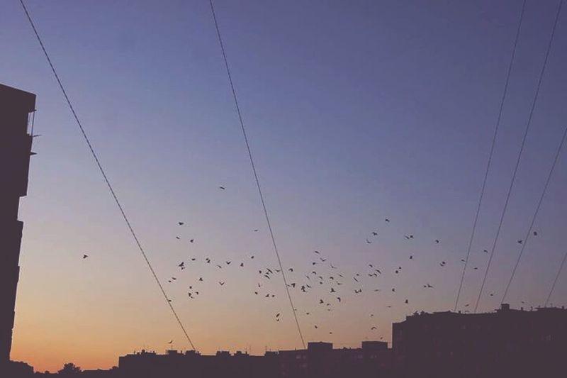 Sky Skyporn Ravens Birds Flying Midnight Love Enjoying Life