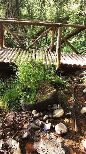 Nature Finds A Way Bridge In The Woods Vitosha Mountain Sofia, Bulgaria