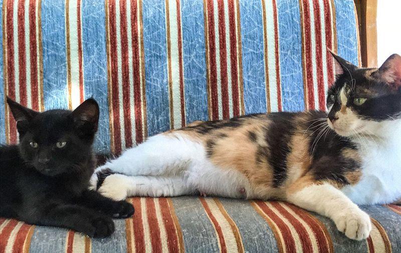 Kedi cat pet