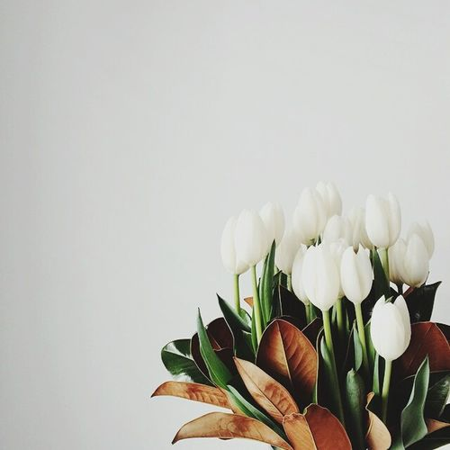 Oops.. White background and white tulips 😁🌷 Flower Fragility Freshness Plant Beauty In Nature Flower Head Nature Studio Shot Petal Growth Close-up Leaf No People Horizontal Indoors  Bouquet Day Flower Photography Tulipmania Tulip Love Home Sweet Home Flowershop On The Street🌷💕 Home Interior Blossom Low Light Photography