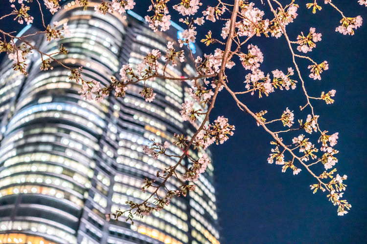 Low angle view of cherry blossoms against building and sky at night
