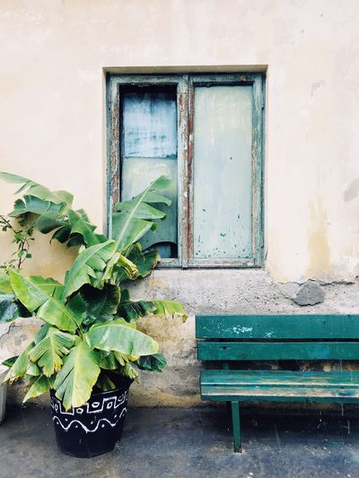 Architecture Leaf No People Window House Built Structure Day Plant Green Color Building Exterior Growth Outdoors Nature