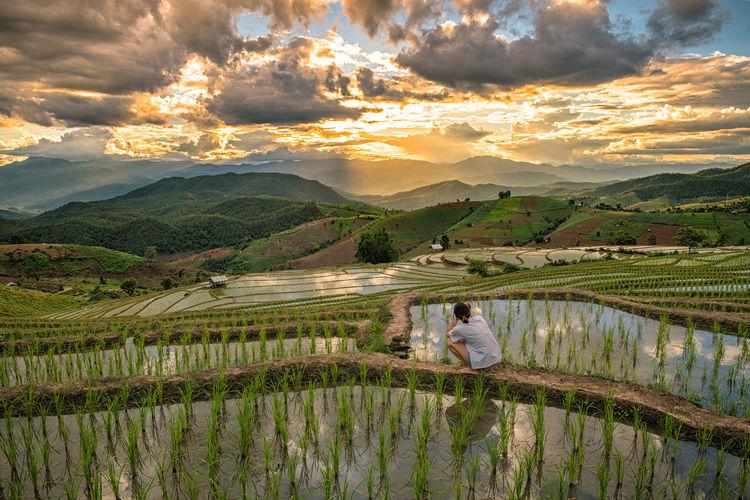 Landscape of Sunset Papongpieng Rice Terraces, Chiang Mai, North of Thailand. Thailand; Ban; Papongpieng Agriculture Beauty In Nature Cloud - Sky Day Farm Farmer Field Growth Landscape Mountain Nature One Person Outdoors People Real People Rice - Cereal Plant Rice Paddy Rural Scene Scenics Sky Sunset Terraced Field Water Women