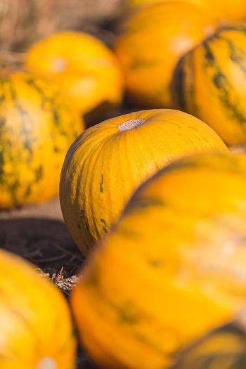 Close-up of pumpkin for sale at market