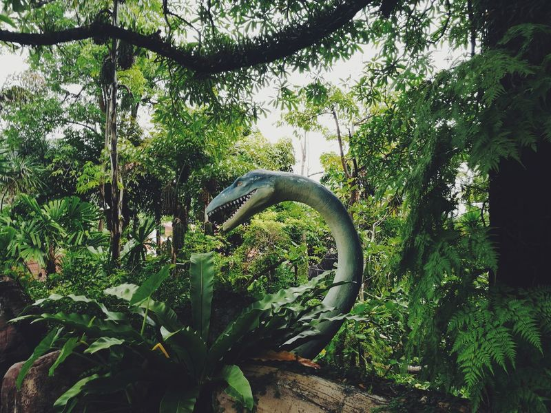 Traveling Travel Photo City Folk Street Tailand Folklife Photos VSCO Beautifull Vscocam Vscogood Beautiful Place Oneday Mood Beauty In Nature Tree Nature Low Angle View Growth Green Color Outdoors No People