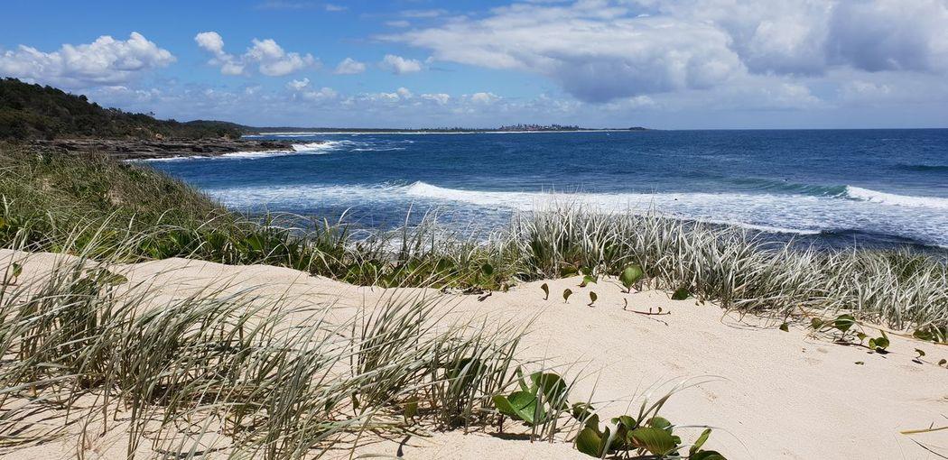 Angourie Point - seegrass Angourie NSW Sea Water Beach Sand Wave Summer Blue Tree Sunlight Sky Surf Coastal Feature Headland Coastline Seascape Ocean Coast