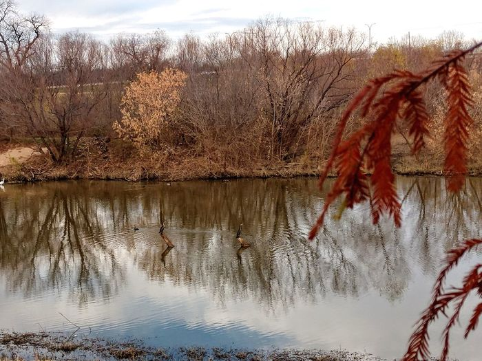 on Golden pond Animallife Coldmornings Aquatic Life Water Tree Hanging Reflection Sky Close-up