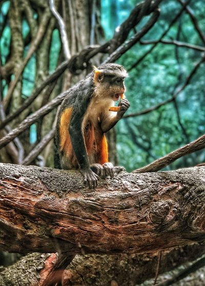 Low angle view of monkey eating tree