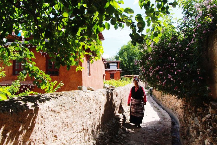 Old Flower Flowers Oldwoman Sky Tree Trees Road Building Summer Summertime OpenEdit