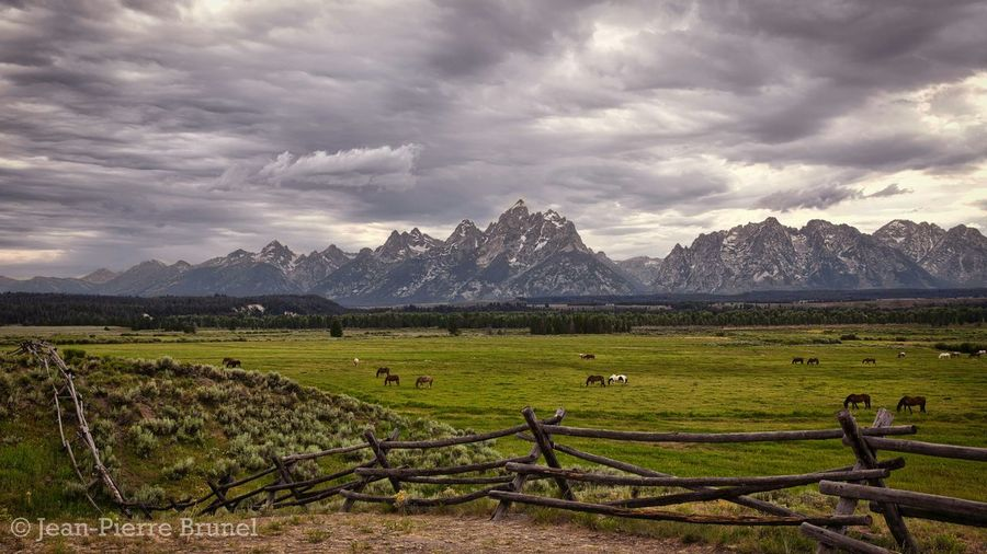 Horses in a Pasture With a Cloudy Sky. Grand Tetons National Park, Wyoming ➖➖➖➖➖➖➖➖➖➖➖➖➖➖ Wyoming Grand Tetons National Park Grand Tetons Horses Horse Mountains Sky