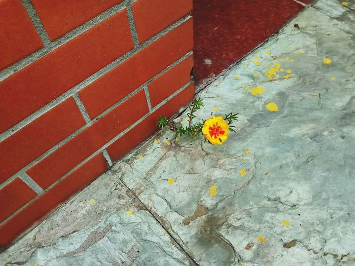 Flower Outdoors Yellow Paint The Town Yellow