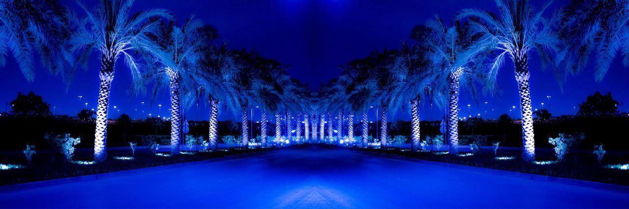 Beauty In Nature Blue Blue Road Diminishing Perspective Empty Growth Illuminated Nature Night Night Lights Night Photography No People Outdoors Palm Tree Road Riyadh Road Scenics Sky The Way Forward Tranquil Scene Tranquility Tree Treelined Vanishing Point