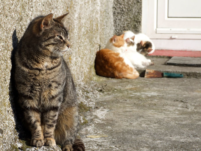 Animal Themes Cat Cats Cats 🐱 Day Domestic Animals Domestic Cat Doorstep Feline Islandlife No People Outer Hebrides Pets Resting Sleeping Tabby Zoology