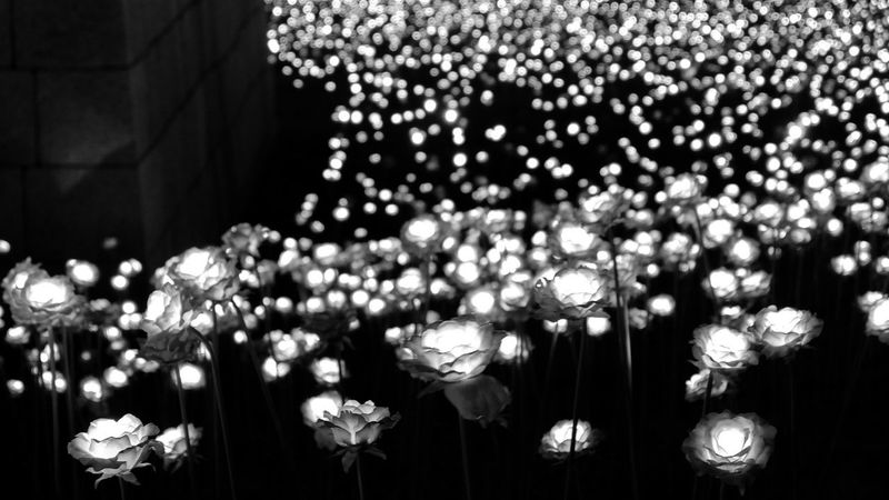 Flower Illuminated Travel Photography FUJIFILM X-T10 Fujifilm_xseries South Korea Flower Photography Flowers_collection Finding New Frontiers Urbanflowers Ledflowers Light And Shadow Lights Light Up Your Life Blackandwhite