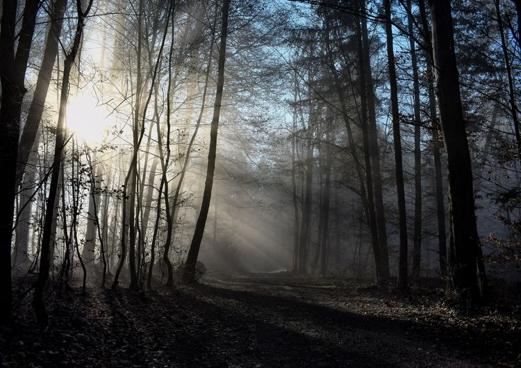 Cold and sunny Forest Landscape Beauty In Nature Day Fog Scenics Outdoors Branch Tranquil Scene Nature Tree