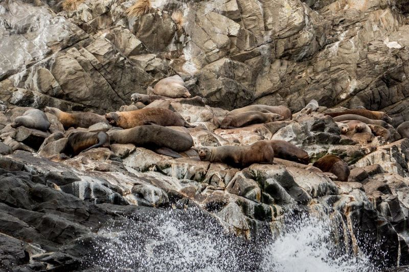 High Angle View Of Seal On Rock At Beach
