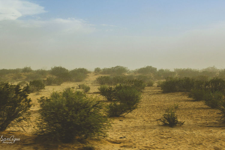 Reassuring sandstorm Beauty In Nature Field Field Work Grass Landscape Nature Outdoors Plant Sky